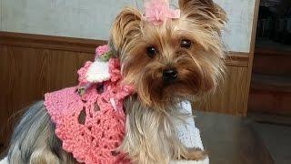 "Crochet ""Glama's Adorable Princess Puppy Dress"""