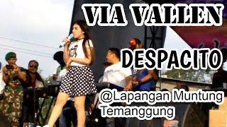 Via Vallen - Despacito Cover feat Sera  Live Lapangan Muntung Temanggung