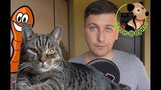 Как понять, что у собаки или кошки есть глисты?