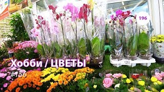 196#156 / Хобби Цветы / 08.2019 - АШАН (ХИМКИ). ОБЗОР