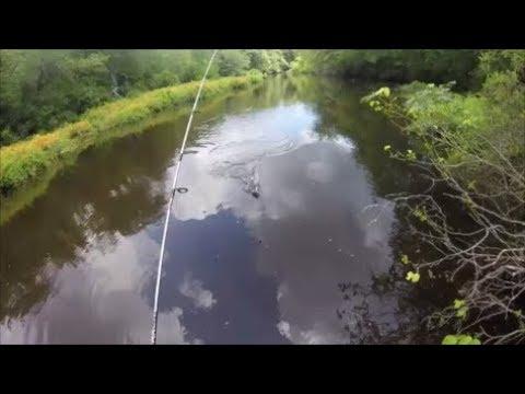 Freshwater Fishing LONG ISLAND Honeyholes