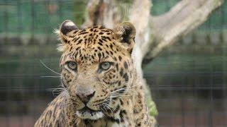 De Olmense ZOO - Dierenfotografie / Animal Photography HD