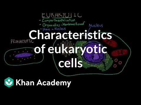 Characteristics of eukaryotic cells | Cells | MCAT | Khan Academy