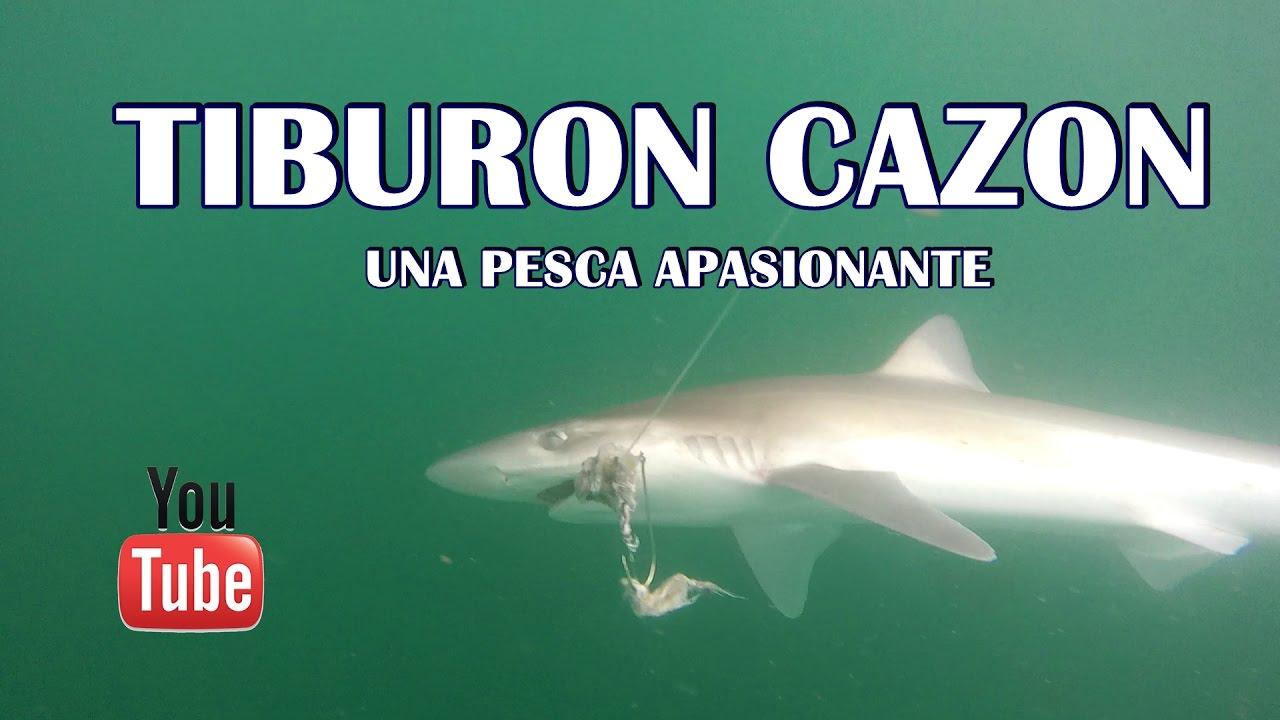 Encantador Anatomía De Un Tiburón Cazón Adorno - Imágenes de ...