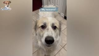 Having a Sad Day? We Got You, Watch These Hilarious Pets, Solved! 😍