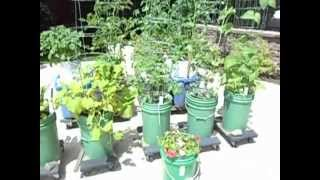 Self-watering Container Garden On Driveway June 29 2014
