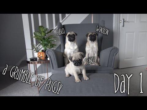 Stanley Meets Pablo & Winston | Day 1 Part 2