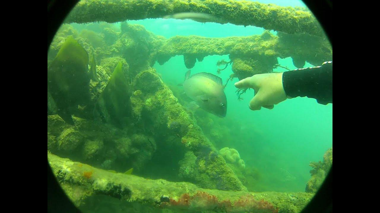 Moltke Wreck Magnetic Island