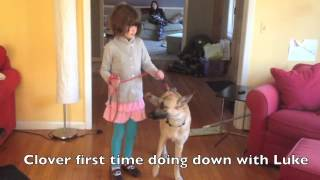 Aggressive Dog Rehab with Kids- Solid K9 Training