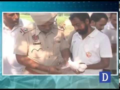 ہندوستان نے جاسوسی کے شبہ میں ایک اور کبوتر پکڑ لیا