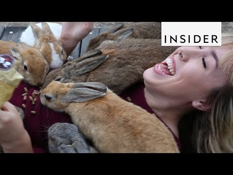Download Youtube: Escape Humanity to Hang with Animals