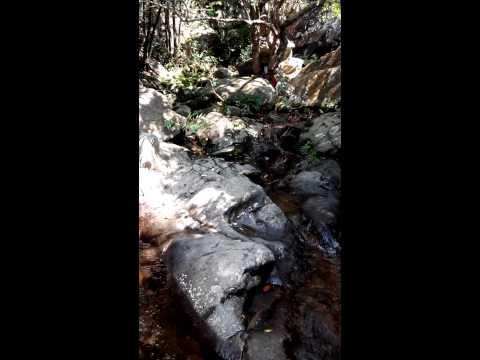 Video sample is taken by NEO N003 Premium version in Shenzhen Wutong Mountain Park