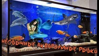 необычные аквариумные рыбки.