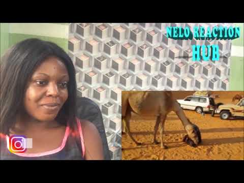 Download Christian reacts to Animals React to Quran & Azan