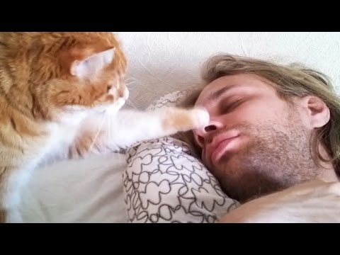 Thumbnail: Cute Pets Waking Up Their Owners ⏰ Best Alarm Clock Ever! [Funny Pets]