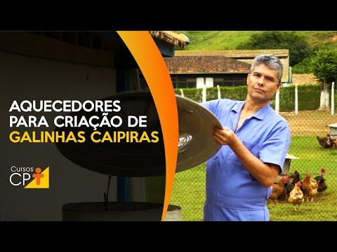 Clique e veja o vídeo  Como utilizar aquecedores na criação de galinhas caipiras