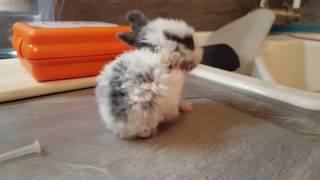 Baby Kaninchen tanzt! Total süß!