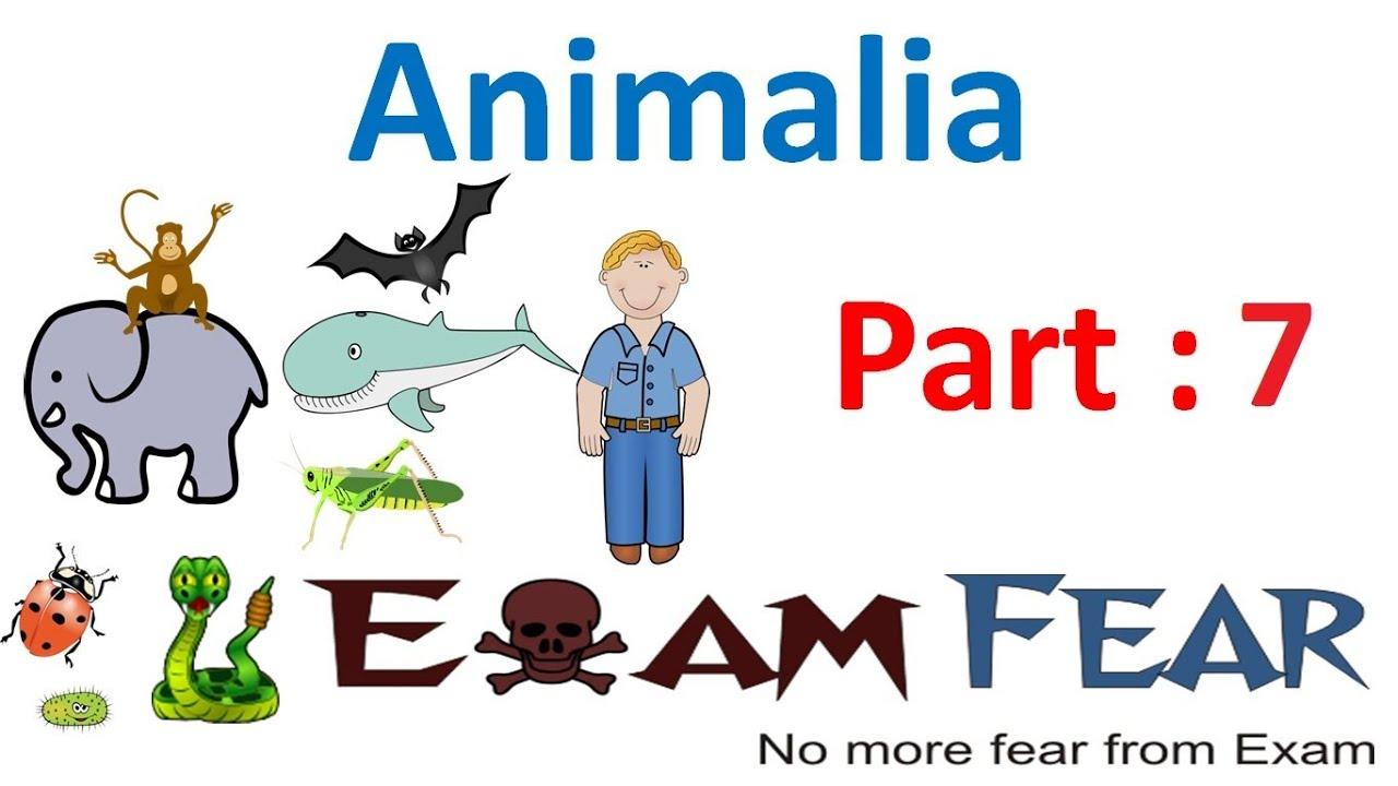 Biology Animalia Part 7 Segmentation Cbse Class 11 Xi Youtube