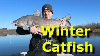 Cold weather winter blue catfish. Best winter catfish bait.