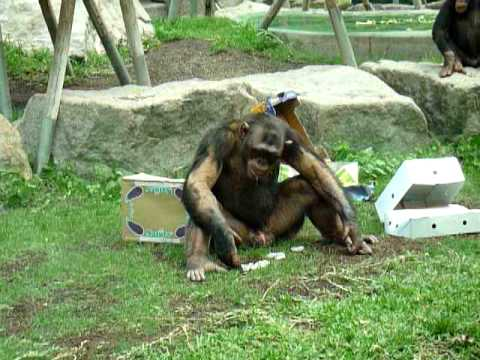 tierpark hellabrunn zoo m nchen munich affe mir ist langweilig monkey i 39 m bored youtube. Black Bedroom Furniture Sets. Home Design Ideas