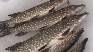 Зимняя рыбалка: закрываем сезон. Ловим щуку на жерлицу.