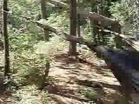 Tour Of Robinson Lake Interior Campsite Algonquin Park Youtube