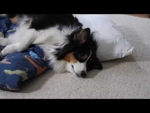 Post Surgical Pet Care at Home