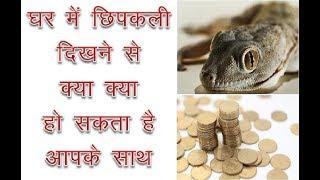 घर में छिपकली दिखने से क्या हो सकता है आपके साथ ! Benefits of Lizard