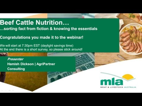MBfP webinar | Beef cattle nutrition