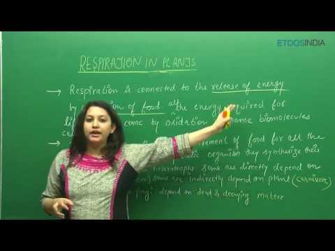 Respiration In Plants by Etoos Faculty Shivani Bhargava (SB) Mam (ETOOSINDIA.COM) thumbnail