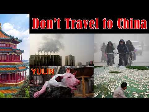China Crisis: Dogs