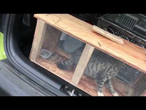 Diy Cat or Small Animal Trap Works!
