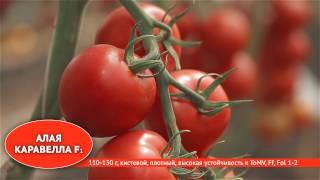 Лучшие сорта и гибриды томатов для профессионалов(, 2016-12-19T09:32:58.000Z)