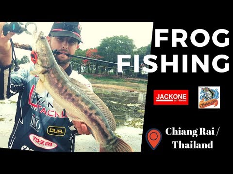 Frog Fishing / Giant Snakehead / Chiang Rai - Thailand / Jack-One C4