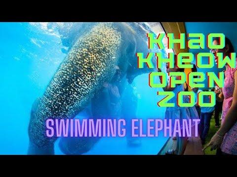 Swimming Elephant at Khao Kaew Open Zoo