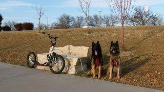 Urban Dog Mushing In Wichita