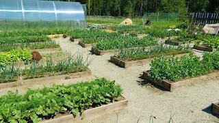 Супер огород мечты 2018 или допрос начинающего огородника