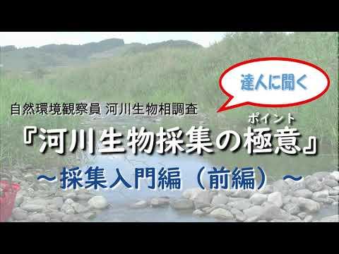 河川生物相調査 水生生物採集入門(前編)