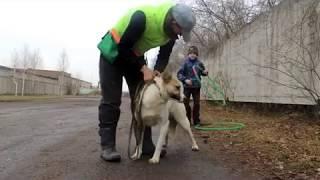 Омский приют для собак «ДРУГ» занятие Ареста