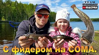 С фидером на СОМА Рыбалка с ребёнком Наловили Американских СОМОВ