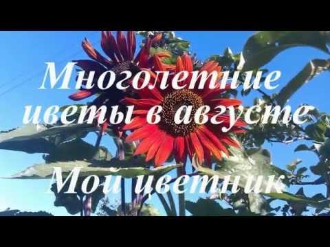 Многолетние цветы в августе