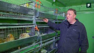 Курятник в гараже с самодельными клетками
