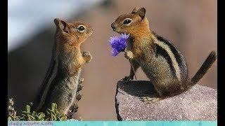 PIlla Ra   Ft Chipmunks    Cute Love Story   RX 100   Edited version 