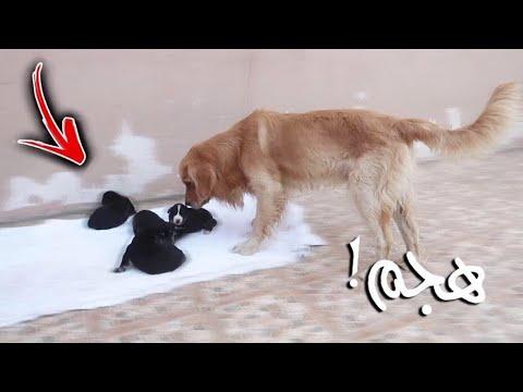 ردة فعل روكي يوم شاف عياله لأول مرة في حياته !!