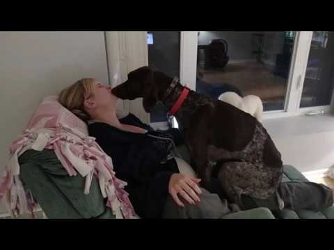 Dog loves his mommy!  - German Shorthaired Pointer kissing/licking and being a lap dog!