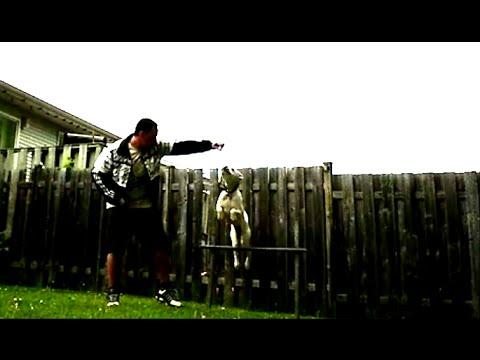 LunaTube - Boxer Dog Jump Tricks! Wow!
