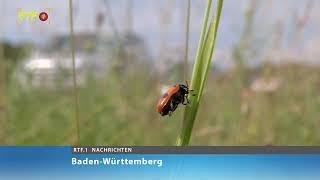 NABU ruft zum Zählen von Insekten auf