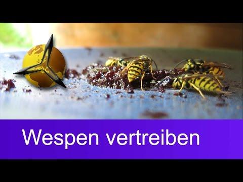 Wespenplage / Wespen vertreiben: Was hilft gegen Wespen?