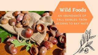 Fall Edibles Class: Bay Nuts &amp Acorns