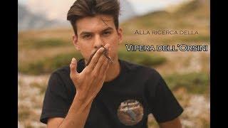 Alla ricerca della Vipera dell'Orsini (Vipera ursinii)